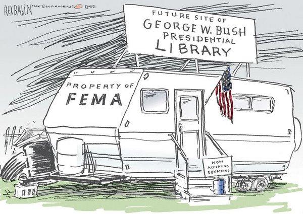 Bush liberry